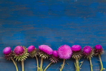 decorative border with thistle flowers on blue rustic wood