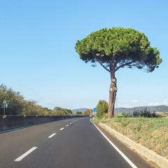 Lonely pine tree by the road near Orbetello, Tuscany, Italy.
