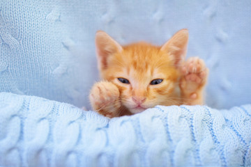 Baby cat. Ginger kitten sleeping under blanket