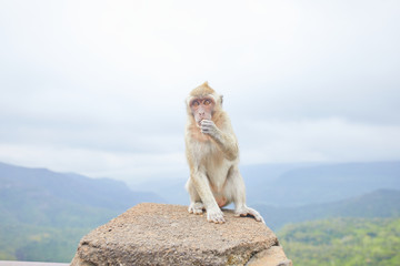two monkey is sitting on the mountain of the island of Mauritius