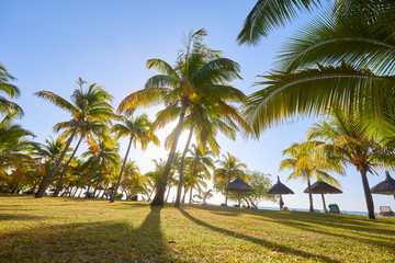 palm trees on the beach of mauritius island