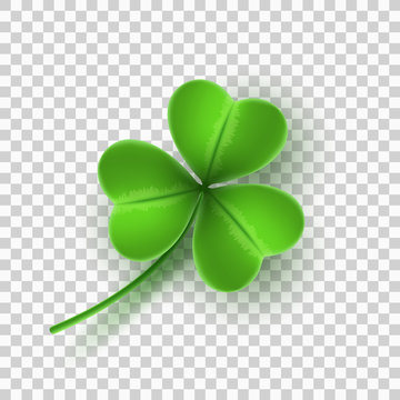 Realistic green clover isolated on transparent background. Element for Saint Patricks Day. Vector illustration