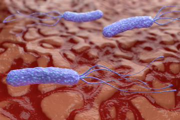 Illustration of Helicobacter pylori bacteria on the background of a human stomach. Medical concept.