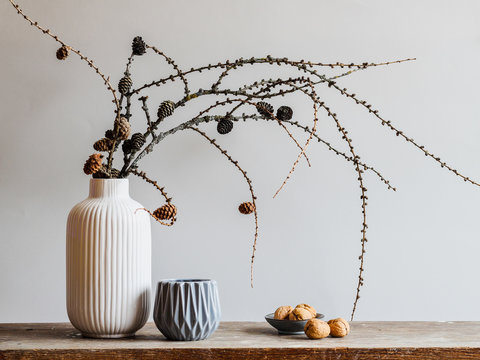 Autumn composition with larch tree branches with cones on a gray background. Fall mood still life in Nordic minimal style