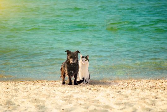 A dog and a cat on the beach are sitting together on the seashore, amid the glowing sun.