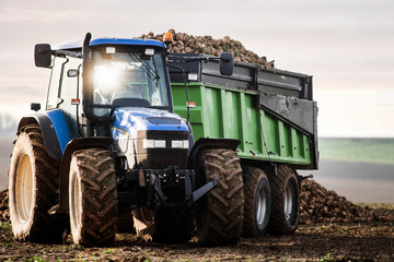 tractor carrying the sugar beet crop