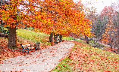 Printed kitchen splashbacks Autumn Wooden bench in Autumn season with colorful leaves and trees - Seymenler Park, Ankara