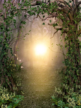 Path through enchanting fairytale deep forest view with beautiful heavenly sunset