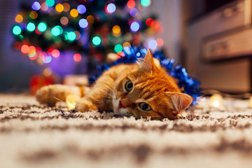 Ginger cat playing with garland and tinsel under Christmas tree. Christmas and New year concept