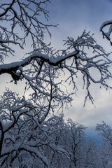 Winter in Nuorgam, Lapland, Finland