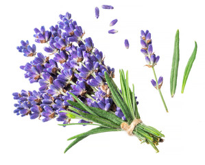Bunch of lavandula or lavender flowers on white background.