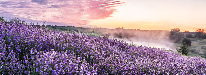 Keuken foto achterwand Lavendel Colorful flowering lavandula or lavender field in the dawn light.