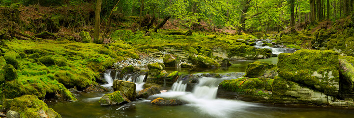 River through lush forest in Northern Ireland