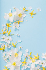daffodils and cherry flowers on blue background background