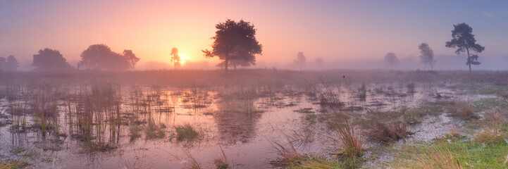 Foto op Canvas Zonsondergang Sunrise over wetland in The Netherlands