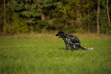 Dog poops in the meadow