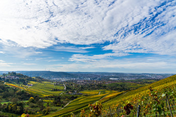 Germany, Stuttgart city tv tower and skyline behind colorful vineyard in autumn season