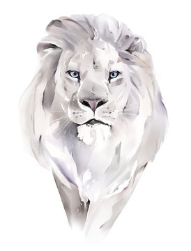 watercolor illustration. Drawing - lion isolated on white background