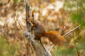 Close up picture of squirrel on a branch