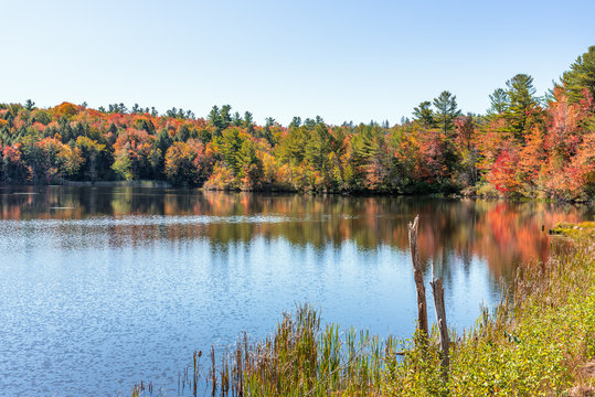Colourful autumnal trees on the shore of a lake and clear sky on a sunny day