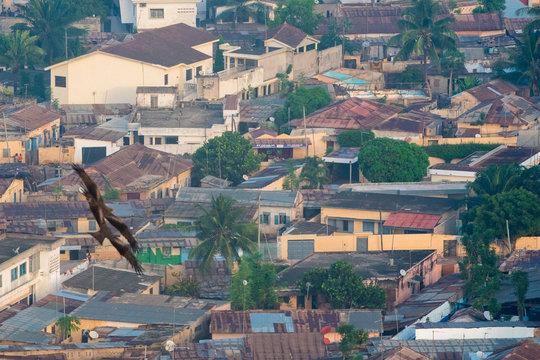 Falken in Togo Lome Flying high