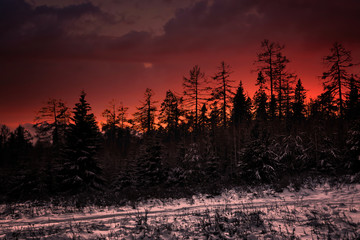 Door stickers Bordeaux Colorful sunset in the winter forest. Beautiful winter landscape in the mountains. Sunrise.