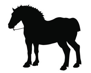 black silhouette of a powerful horse on a white background, isolated vector images, pictures