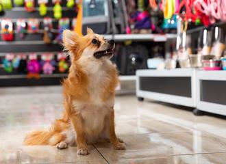 Cute puppy walking in pet shop