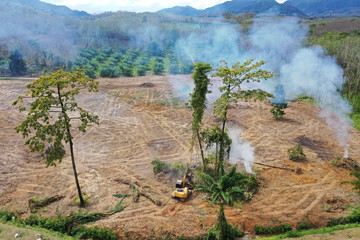 Deforestation. Forest is knocked down and burned to make way for palm oil plantations in Southeast Asia