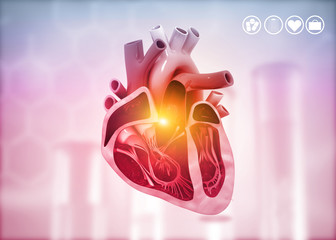 Cross section of human heart diagram on medical background. 3d illustration