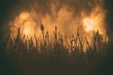 Orbulak battle. Fototapete