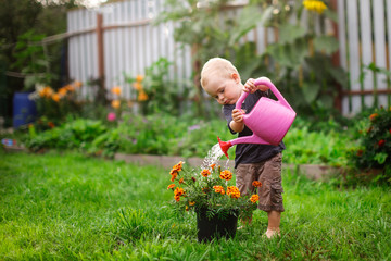 Child boy watering flowers in garden from can
