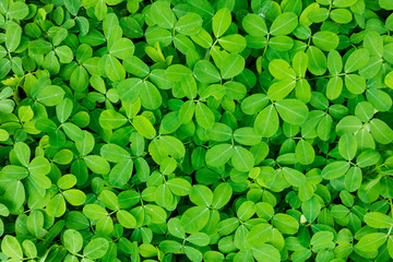 The background image of green leaves