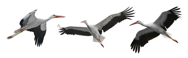 Collection flying storks isolated on white Fotomurales