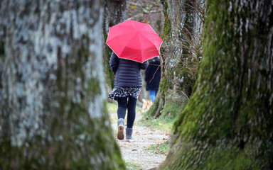 People walk through an alley of autumnal trees on a rainy day in Holzkirchen