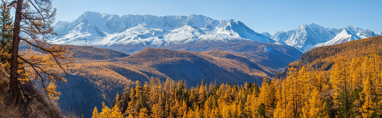 Wall Mural - Panoramic autumn view, sunny day.  Nature of Siberia, wild place. Mountain taiga, snow-capped peaks.