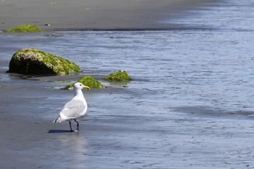 closeup of a seagull on the beach on the edge of the ocean