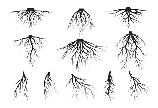 Set of tree roots silhouettes. Vector isolated Illustration.
