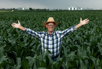 Senior farmer standing in corn field with arms outstretched.