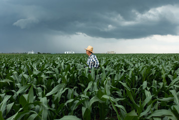 Senior farmer standing in corn field examining crop during bad weather.