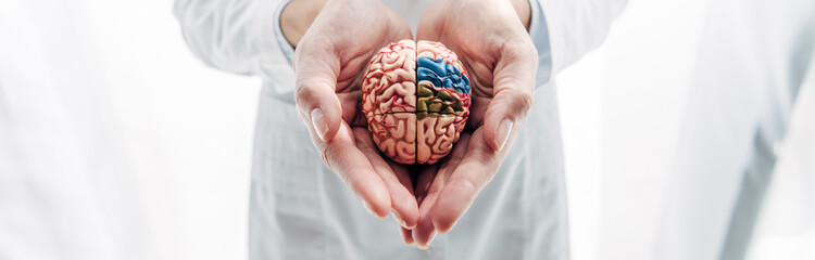 panoramic shot of doctor holding model of brain in clinic