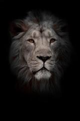 Aluminium Prints Moon lion portrait. Portrait full face. powerful male lion with a chic mane impressively lies.