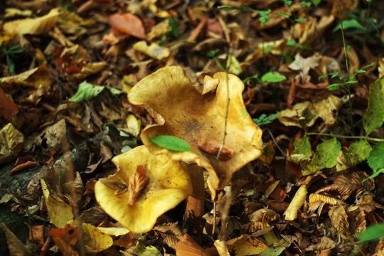 Pilze im Herbstlicht