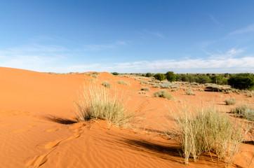 Photo sur Aluminium Rouge traffic Parc national Kalahari Gemsbok, parc transfrontalier de Kgalagadi, Afrique du Sud