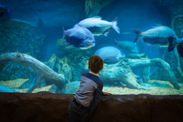 Fototapeta little boy watching fishes in large aquarium
