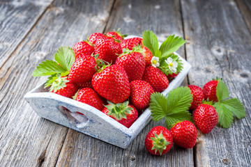 Fresh ripe strawberries offered as closeup shabby chick wooden tray on an old rustic board with copy space