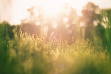 Printed kitchen splashbacks Beige Green grass background with sun shine