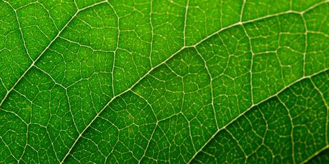 Foto op Canvas Macrofotografie Green leaf with structure, macro