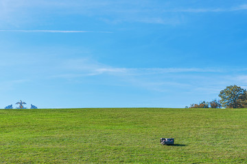A lonely automatic electric lawnmover working thru the wast areas of lawn at Schoenbrunn in Vienna