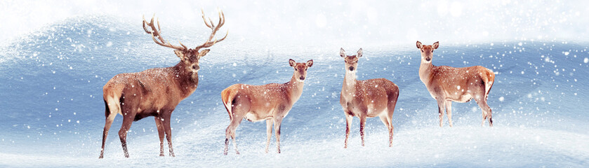 Group of noble deer in the snow. Christmas artistic image. Winter wonderland. Banner format.